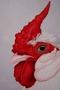 Rooster - beautiful!