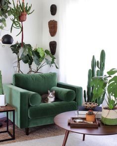 Modern living room with green armchair surrounded by plants and a cute cat