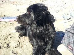 #Freya #Dog #Puppys #LoveAnimals #MyMonsters #MyPets #CanaryIsland #Beach #Summer #Sun