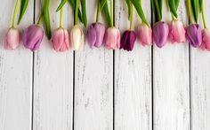 Обои красочные, цветы, букет, тюльпаны, тюльпаны
