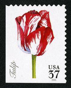 37c Tulip single