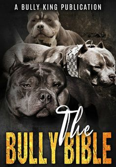 2 best healthy raw dog food recipes for american bullies american the bully bible everything you need to know about the american bully the 1st american bully book weverything you could possibly want to know about the forumfinder Choice Image