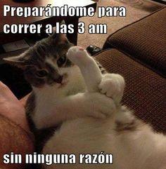 Memes graciosos de gatos