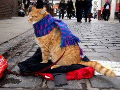 Bob the Cat London   ... pics I found in the Bob the Big Issue Cat and James group on Flickr