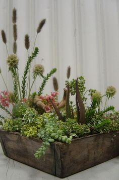 natural boxed garden