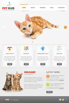 Clean web design with cats. Cats are always needed