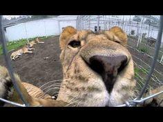 Black Jaguar White Tiger Foundation Part 1 - YouTube