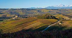 Geometría vitivinícola. | Matemolivares