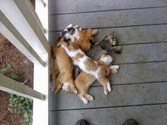 """Pile on! (Looks like the game """"ha-ha"""" that we used to play at sleepovers!)"""