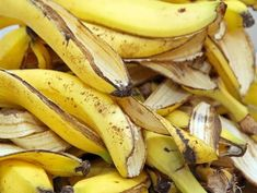 Try banana peels, stop wrinkles Skin aging? Try banana peels stop wrinkles Banana peel comes with loads of. Banana Peel Uses, Banana Peels, Banana Madura, Wrinkled Skin, Growing Roses, Tricks, Healthy Life, Food And Drink, Eat