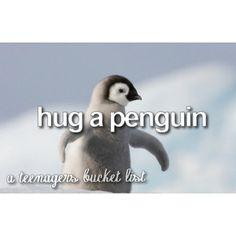 hug a penguin