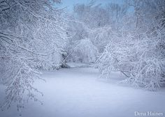 13 Snow Photography Tips: A Beginner's Guide