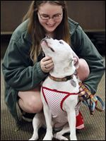 BADRAP forum addresses myths about 'pit bulls' Maddie Keating, 16, of Sylvania pets her 'pit bull' Wendy at the EMS Training Center during the forum attended by about 80 people.
