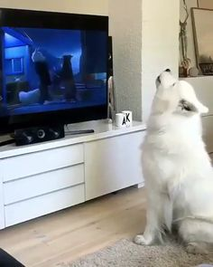 Dog watching TV and imitating cartoon characters. Funny Animal Videos, Cute Funny Animals, Animal Memes, Cute Baby Animals, Funny Cute, Funny Dogs, Animals And Pets, Dog Videos, Hilarious