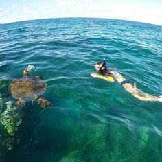 Would you rather snorkel or kayak with green sea turtles?  #turtletuesday #mkakayak #mkamaui