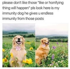 Please Don't Like Those Like Or Horrifying Thing Will Happen Pls Look Here Is My Immunity Dog He Gives U Endless Immunity From Those Posts - Funny Memes. The Funniest Memes worldwide for Birthdays, School, Cats, and Dank Memes - Meme Cute Funny Animals, Cute Baby Animals, Funny Cute, Animals And Pets, Hilarious, Cute Puppies, Cute Dogs, Dogs And Puppies, Cute Babies