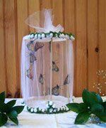 Beautiful LIVE butterfly centerpiece!! Monarchs to release at reception?