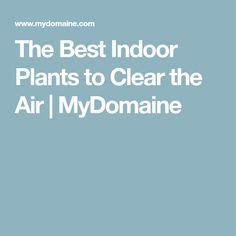 The Best Indoor Plants to Clear the Air | MyDomaine