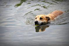 Upały ... oto pomysł Barona na gorące dni :-D #Psy #adopcje #dogs #adopt #shelter