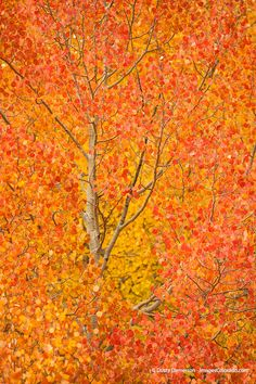 Autumn Reds - October 2013 Print of the Month. Special prices on signed and matted prints this month only.