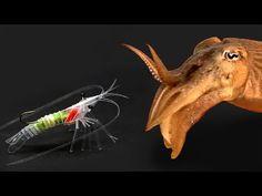 Shrimp made using a straw - YouTube