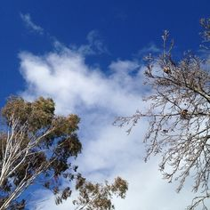 A warmer day today. #sky #cloud #trees #nature #mindfulafternoon