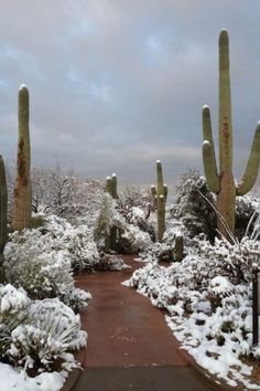 Saguaro National Park, Arizona - I love cactus and agave plants, but covered in snow I have they never seen before. Beautiful World, Beautiful Places, Beautiful Pictures, Photos Voyages, All Nature, Cactus Y Suculentas, Cacti And Succulents, Best Photographers, Winter Scenes