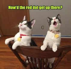 Funny Animal Pictures Of The Day  23 Pics