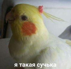 вп Orange Things orange k chilke ka face pack Hello Memes, Russian Memes, Russian Quotes, Funny Mems, Cute Love Memes, Cartoon Profile Pics, Meme Faces, Stupid Memes, Animal Memes