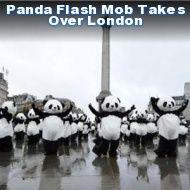 Panda Flash Mob
