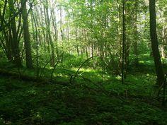 """""""Der Wald ist wie eine Parallelwelt zu unserer umtriebigen Alltagswelt, eine Welt voller Geheimnisse, die es zu entdecken lohnt, die Schutz und Geborgenheit schenkt, die uns zu kleinen Abenteuern einlädt und in der Heilkräfte wohnen, die uns an Körper, Geist und Seele gesund werden lassen oder uns ganz einfach wieder in die Ruhe bringen,"""" schreiben Annette Bernjus und Anna Cavelius in ihrem Buch """"Waldbaden"""". Die Bäume wurden bereits vor Tausenden von Jahren von den Germanen verehrt, denn sie… Shinrin Yoku, Anna, Plants, Outdoor, Environment, Photo Shoot, Woodland Forest, Healthy, Nature"""