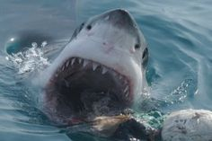 Shark Weekend with @GreatEscapes in Dartmouth  https://www.facebook.com/bythedart  #Dartmouth
