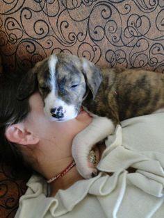 Napping puppy and human pal