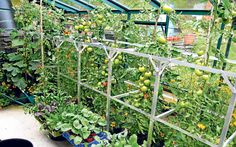 With the right growing techniques, an unheated greenhouse can be a productive,   pollution-free garden asset all through the year.