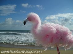Pale pink fluffy baby Flamingo.