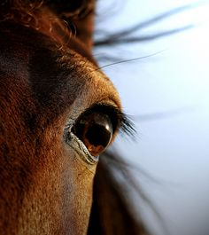 Dogs, Cats, & Horses: They seem to look right into your soul and see you for who you really are. Unconditional love is a beautiful thing that comes in all shapes and sizes Pretty Horses, Horse Love, Beautiful Horses, Beautiful Eyes, Simply Beautiful, Westerns, Horse Ears, All About Horses, Majestic Horse
