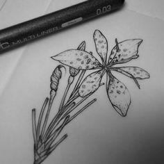 #DaniloSales #Seiva #Tattoo #Tatuagem #TattooArtist #Tatuador #Draw #Desenho #Illustration #Ilustração #Tatuagemfeminina #Tatuagemmasculina #blackwork #blackworker  #botanictattoo  #botanic #tatuagemdelicada #delicada #tatuagembotanica #engraving  #blackink #blacktattoo #linework #blackworker #woodcuttattoo #dotwork #pontilhismo #black  #preto  #flower #flowertattoo #ilustraçãobotanica  #pontilhismo #miniflowers #flor #tattoo #ideias #tattooideias #sunflower #girassol #orquidea #orchid…
