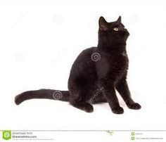 Image result for sitting cat