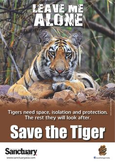 Help protect and save the TIGER