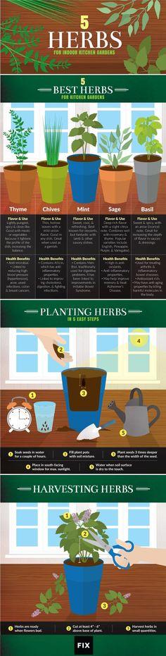 5 Kitchen Herbs for Kitchen Gardens by Kitchen Herbs, Herb Garden In Kitchen, Herbs Garden, Kitchen Ideas, Kitchen Gardening, Kitchen Garden Plants, Kitchen Garden Window, Kitchen Window Sill, Harvest Kitchen