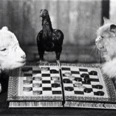 What a faceoff. #animals #vintage #blackandwhite