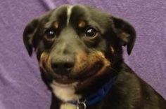 31 reacciones de perros para situaciones cotidianas