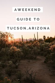 It's a city with incredible cuisine, outdoor adventure, and a new chic inn. Checkout all my tips in the ultimate weekend guide to Tucson, Arizona. Visit Arizona, Tucson Arizona, Arizona Road Trip, Arizona Travel, Travel Design, Weekend Trips, Travel Usa, Places To See, Travel Inspiration