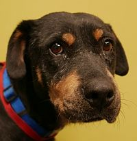 Canela is available for adoption! Call us at (858) 676-1600 if you are interested!