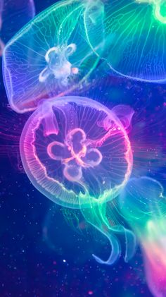 Colorful Jellyfish by Fox Tang