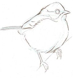 From: The Laws Guide to Drawing Birds - John Muir Laws - Animals Bird Drawings, Animal Drawings, Drawing Sketches, Pencil Drawings, Drawing Birds, Drawing Guide, Sketching, Drawing Lessons, Watercolor Bird