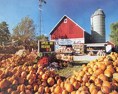 In 1972, Jim Goebbert bought the 40 acre farm in South Barrington - We sld pumpkins on the roadside and got so busy we had to close the stand in Arlington Heights.  This was one of the first fall festivals.