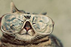 hipster kitteh