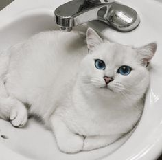 But that doesn't mean Coby doesn't do normal kitty things like sitting in the sink...