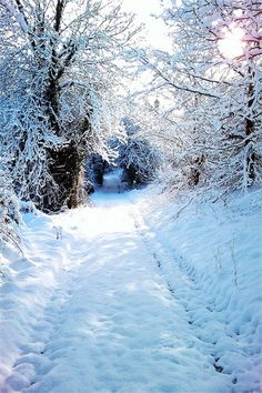 A Beautiful Snowy Road with Trees Pictures] I Love Snow, Winter Love, Winter Night, Image Nature, Winter Scenery, Winter Magic, Winter's Tale, Snow Scenes, Winter Beauty